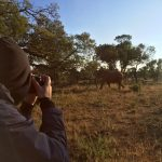 safari shooting